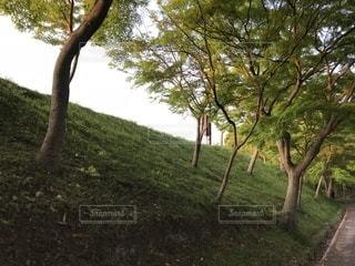 芝生のフィールドのツリーの写真・画像素材[1170001]