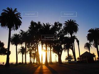 ヤシの木とビーチの写真・画像素材[962070]
