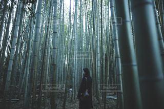 自然,秋,京都,竹,ポートレート