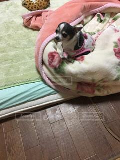 ベッドの上に座っている犬の写真・画像素材[904950]