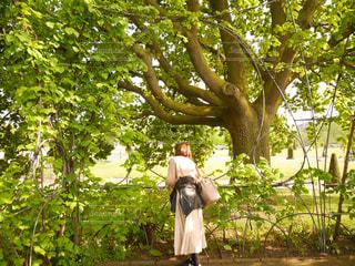 緑,後ろ姿,ヨーロッパ,庭園,イギリス,イングリッシュガーデン,海外旅行,トラベル,英国,ケンジントン宮殿