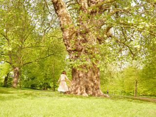 公園,緑,後ろ姿,ヨーロッパ,海外旅行,トラベル,英国,ロンドン公園
