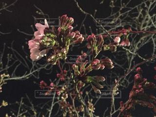 春の写真・画像素材[402642]
