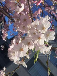 花の写真・画像素材[402652]