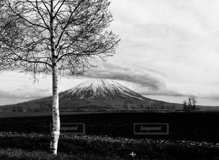雲をまとった羊蹄山 - No.914705