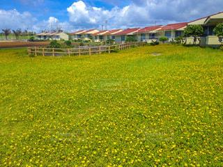 沖縄の緑と黄色のフィールドの写真・画像素材[1122201]