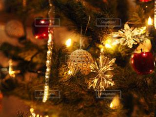 クリスマスツリーの写真・画像素材[914328]