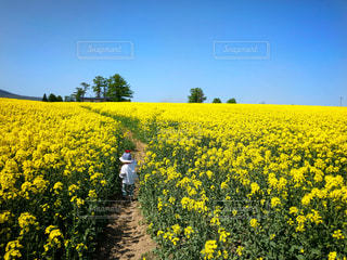 風景,青空,後ろ姿,菜の花,子供,女の子,洋服,人物,背中,人,後姿,春夏
