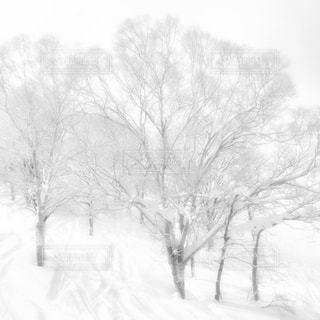 雪に覆われたフィールド - No.908941