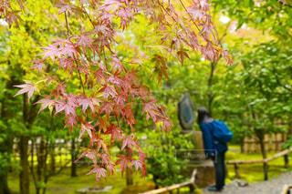 木の隣に立っている男 - No.907138