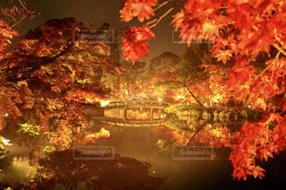 木の花の花瓶 - No.907144