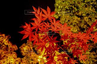 近くの花のアップの写真・画像素材[907146]