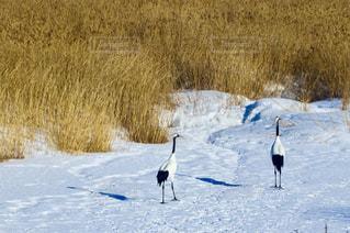雪の中を歩いて鳥 - No.907177