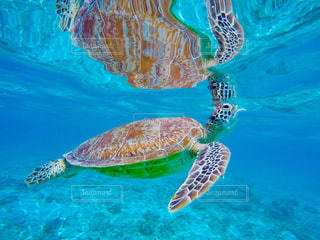 水の下で泳ぐ海亀 - No.908228