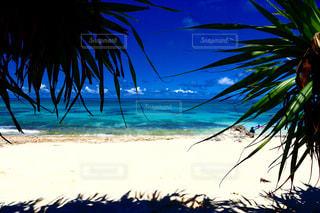 ヤシの木とビーチの写真・画像素材[908259]