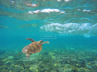 水の下で泳ぐ海亀の写真・画像素材[908321]