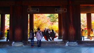 紅葉,屋外,京都,シルエット,光,お寺,正門