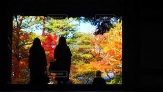 紅葉,屋外,シルエット,樹木,抽象的