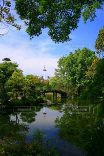 京都,池,光,タワー,庭園