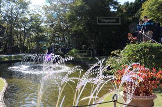 近くのフラワー ガーデンの写真・画像素材[917221]
