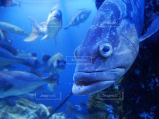 休日 お出かけ 水族館 魚 癒し 休日の過ごし方