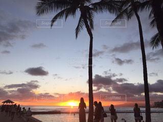 ヤシの木とビーチの人々 のグループの写真・画像素材[1290783]