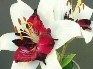 ユリ  百合 花 白色,クレマチス 紫色