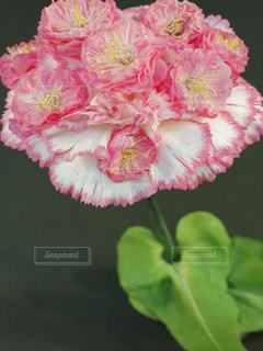 花 カーネーション 梅の花