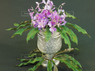 花 ハナダイコン 花大根 紫色