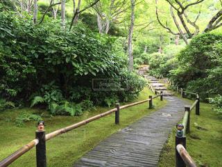 京都庭園の写真・画像素材[908102]