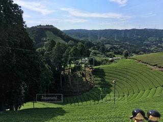 京都,茶畑,和束町