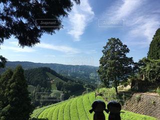 茶畑のある風景の写真・画像素材[908271]