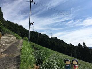茶畑のある風景の写真・画像素材[908276]