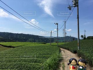 茶畑のある風景の写真・画像素材[908279]