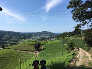 茶畑のある風景の写真・画像素材[908283]