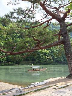 自然,空,京都,ボート,観光地,旅行,旅,松,嵐山,桂川