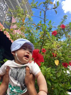 空,屋外,ハイビスカス,沖縄,樹木,人,赤ちゃん,たかいたかい