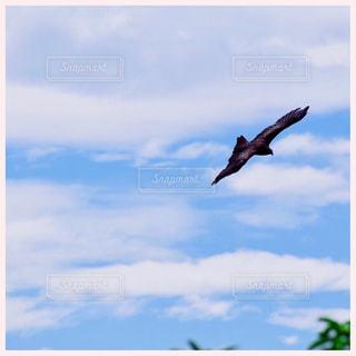 曇りの日に空を飛んでいる鳥の写真・画像素材[1320403]