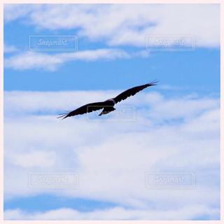 曇りの日に空を飛んでいる鳥の写真・画像素材[1320405]