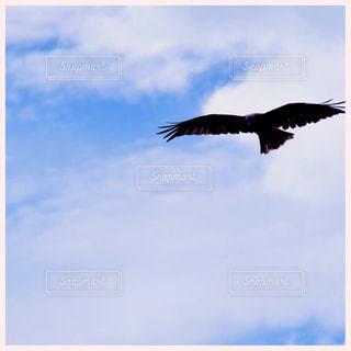 空を飛んでいる鳥の写真・画像素材[1320407]