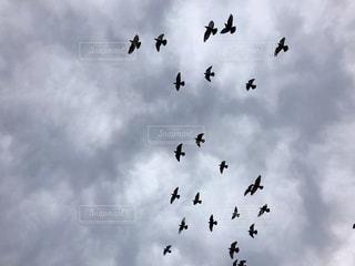 空,公園,秋,鳥,雲,曇り,鳩,群れ,秋空,日中