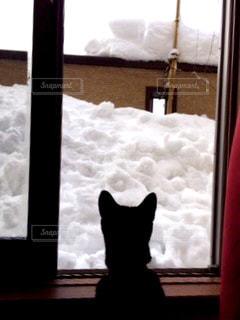 窓の前に座っている猫 - No.909392