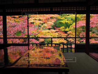 秋,紅葉,京都,観光,瑠璃光院,特別拝観