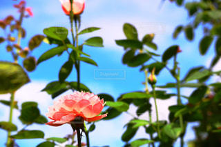 咲誇る華の写真・画像素材[2047752]