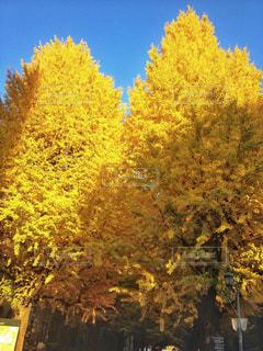 近くの木のアップの写真・画像素材[1135697]