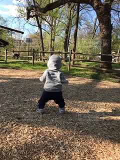 赤ちゃんの後ろ姿の写真・画像素材[2513602]