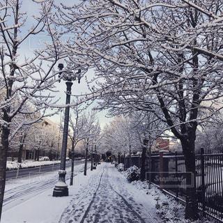 雪の日のある道にて - No.1024732