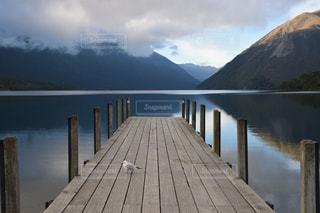 鳥,ニュージーランド,Nikon D5300,セントアーノード,ロトイティ湖,Lake Rotoiti,St Arnaud