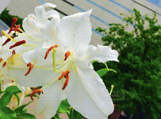 近くの花のアップの写真・画像素材[913751]