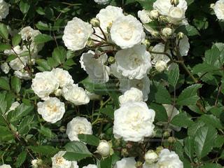 近くの花のアップ - No.910902
